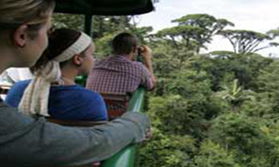 tropical_escape_aerialtram
