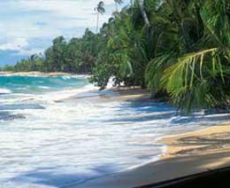 tropical_experience_beach