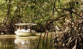 Damas Island Mangrove Boat Tour
