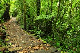 Monterverde Cloud Forest Biological Reserve