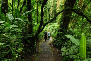 Selvatura Walkways