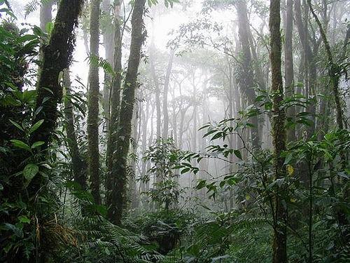 monteverdereservecostarica.jpg