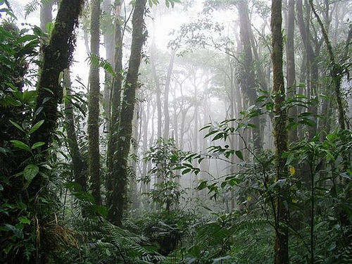 monteverdereservecostarica