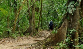 Manuel Antonio National Park Walk Tou