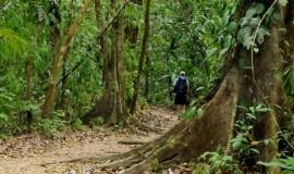 Manuel Antonio National Park Walk Tou